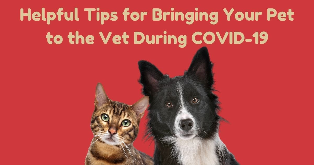 Helpful Tips for Bringing Your Pet to the Vet During COVID-19, by I Love Veterinary