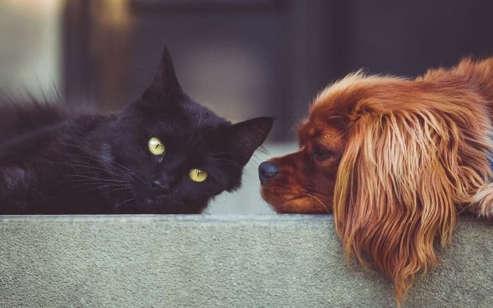 Gabapentin use for dogs and cats- I Love Veterinary