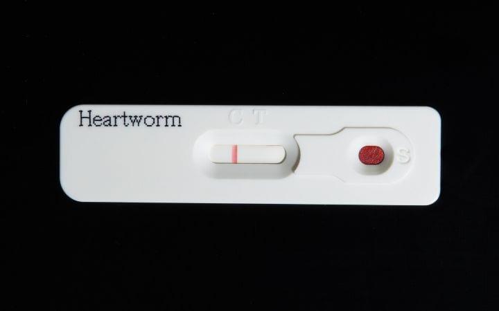 Heartworm test - I Love Veterinary