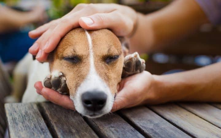 How does gabapentin work for dogs - I Love Veterinary