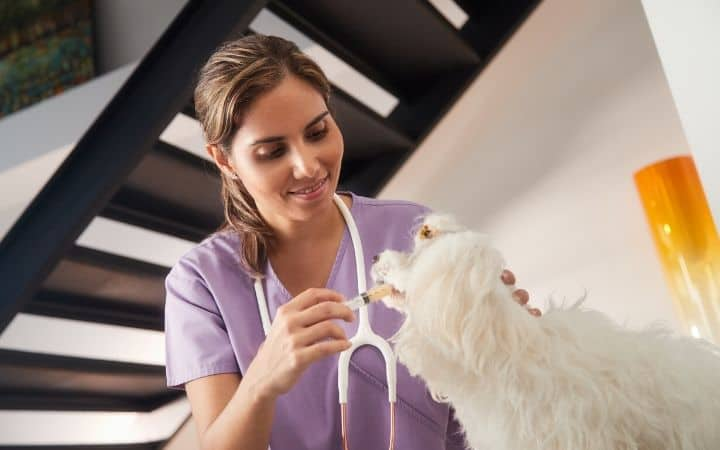 How is Gabapentin given to Dogs - I Love Veterinary