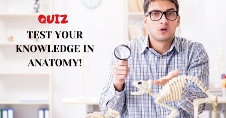 Test your knowledge in anatomy! – Take a quiz