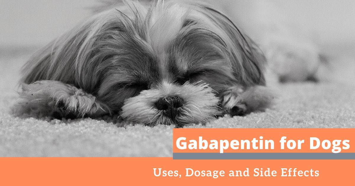 Gabapentin for Dogs: Uses, Dosage and Side Effects