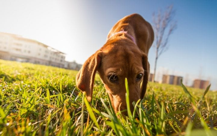 how to deal with coprophagia - I Love veterinary