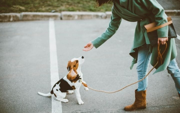 How to stop a dog from eating poop - I Love Veterinary