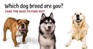 Which dog breed are you, quiz by I Love Veterinary