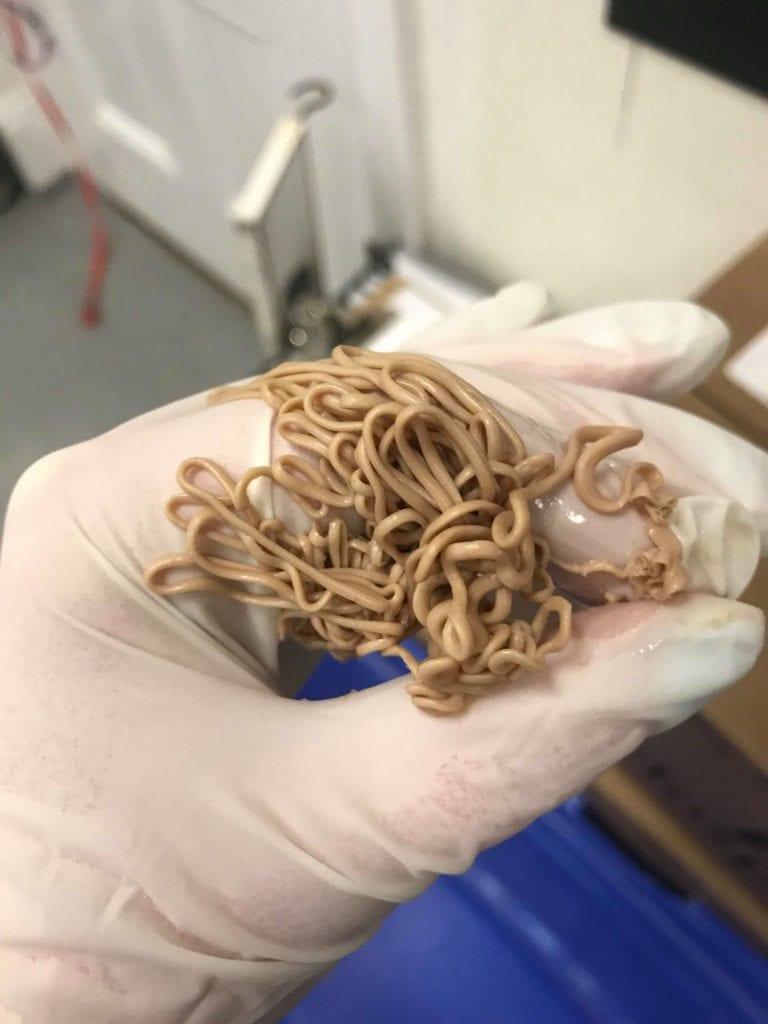 Removed dog anal glands - I Love Veterinary