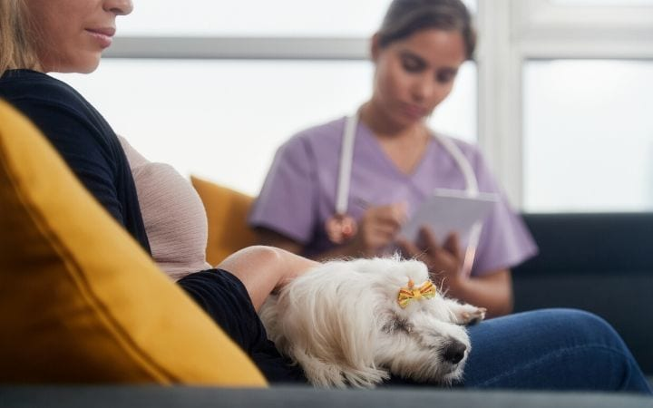 Improving pet owner compliance by making detailed discharge instruction sheet - I Love Veterinary