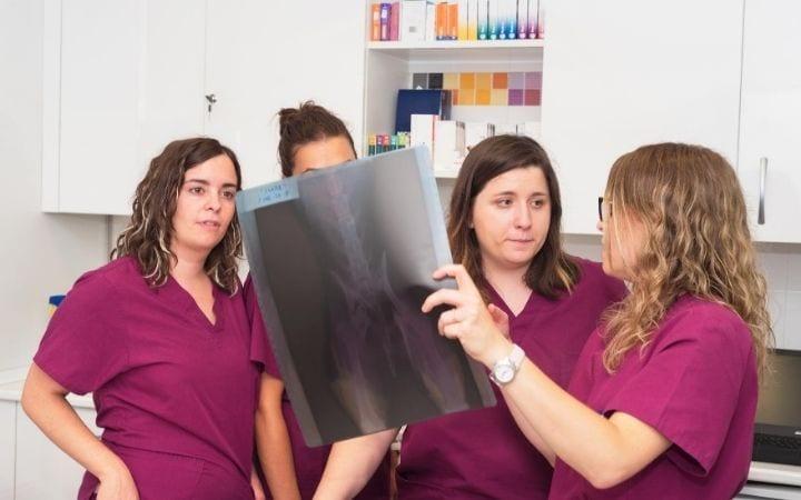 Teaching Entry Level Technicians  in Vet Clinic - I Love Veterinary