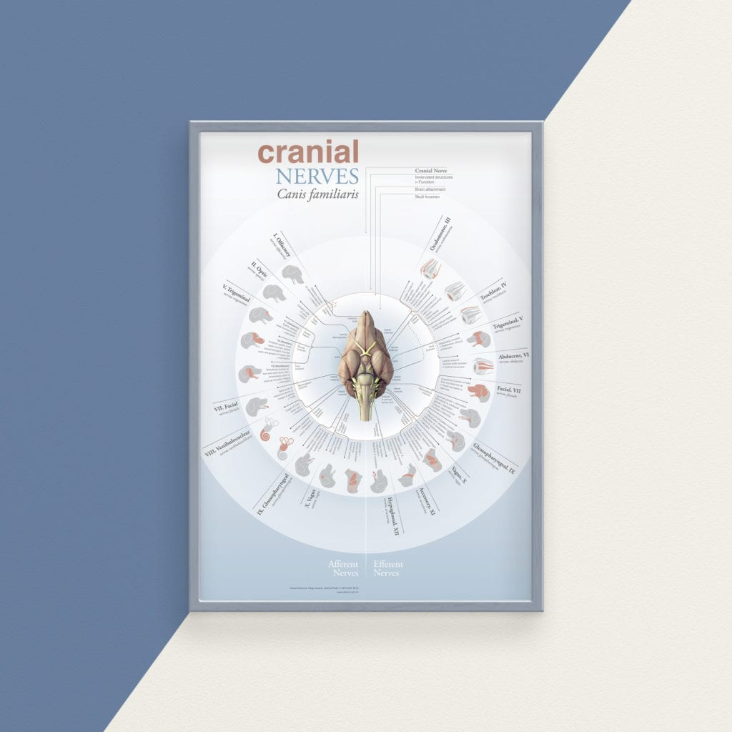 Cranialnerves poster, Diogo Gurra - I Love Veterinary