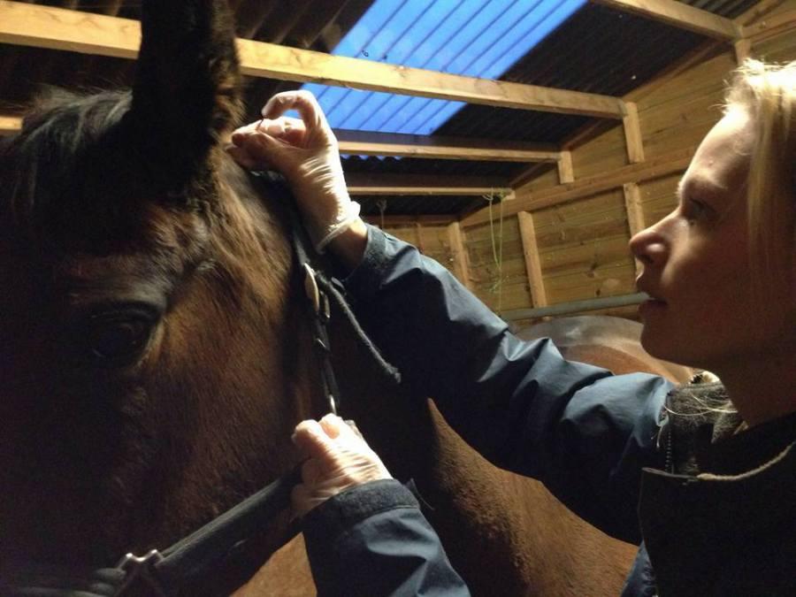 Interview with Jo De Klerk by I Love Veterinary
