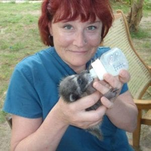 Abbie with baby racoon, Interview With Abbie Deleers - I Love Veterinary