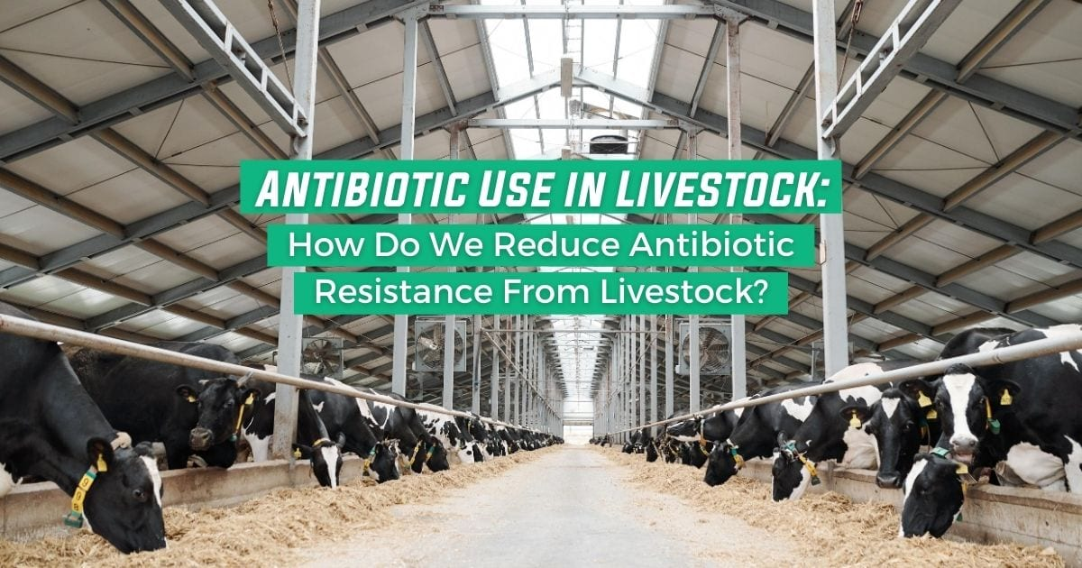 Antibiotic Use in Livestock_ How Do We Reduce Antibiotic Resistance From Livestock - I Love Veterinary
