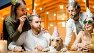 Celebrating dog's birthday, the Best Dog Birthday Cake Recipes - I Love Veterinary