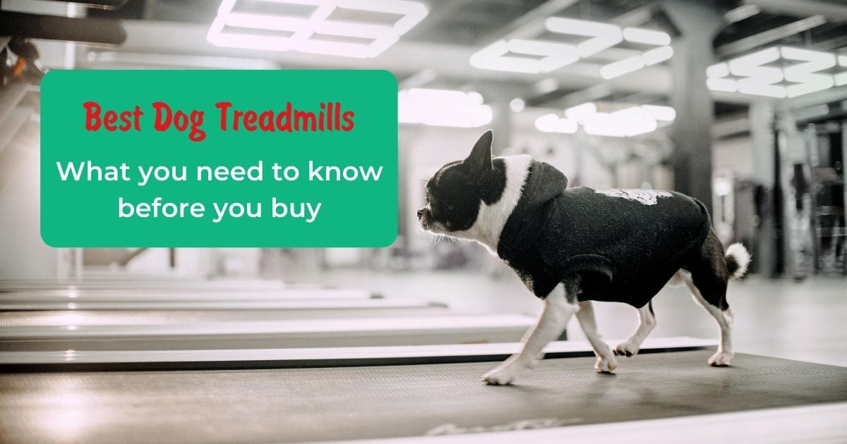 Best Dog Treadmills What you need to know before you buy - I Love Veterinary