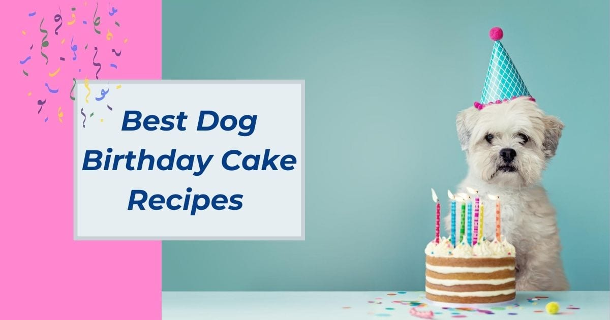 Best Dog Birthday Cake Recipes - I Love Veterinary