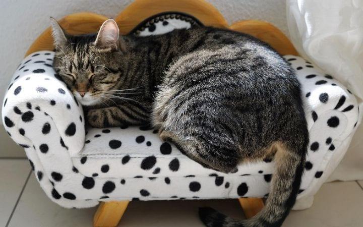 Cat sleeping on cat sofa Gabapentin for Cats I Love Veterinary I Love Veterinary - Blog for Veterinarians, Vet Techs, Students