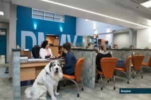 Centre Véterinaire DMV, Vet Clinic of the Week - I Love Veterinary