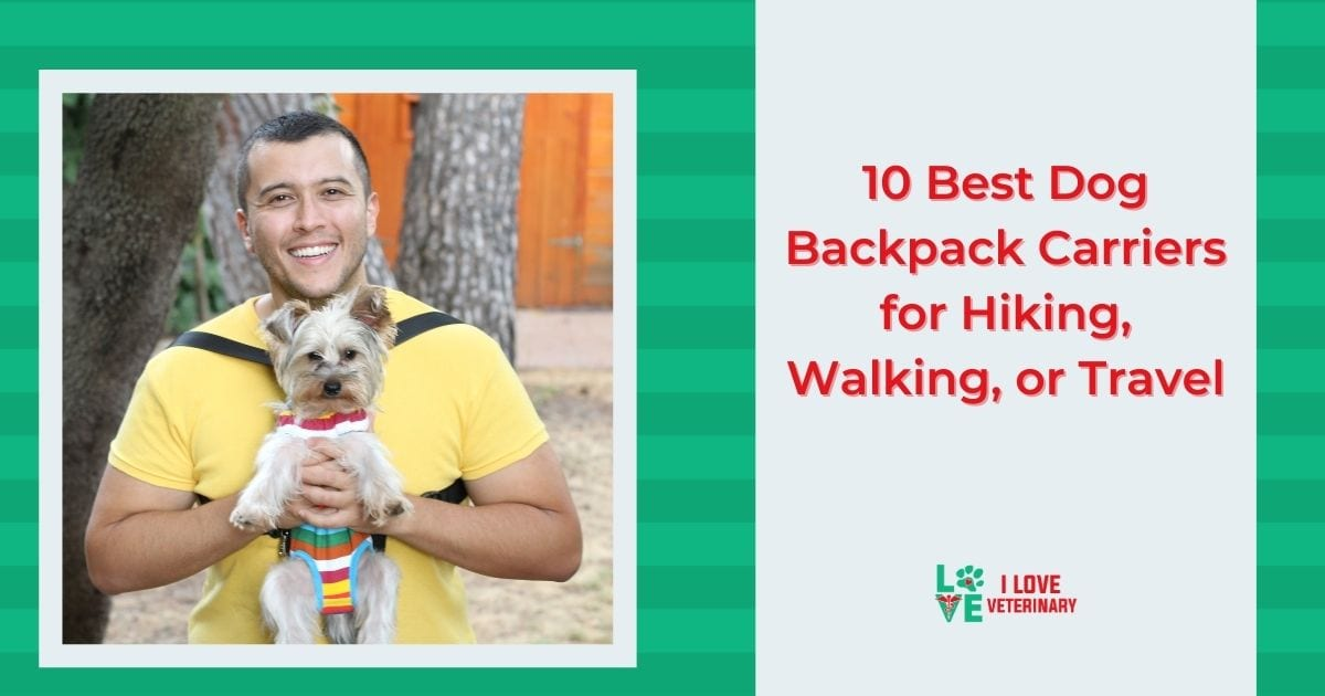 10 Best Dog Backpack Carriers for Hiking, Walking, or Travel - I Love Veterinary