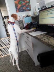 Dog at vet clinic, Vet Clinic of the Week: Dadeland Animal Hospital