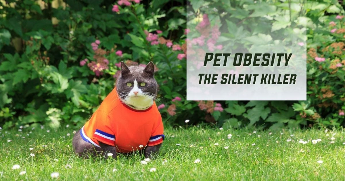 Pet Obesity- The Silent Killer - I Love Veterinary