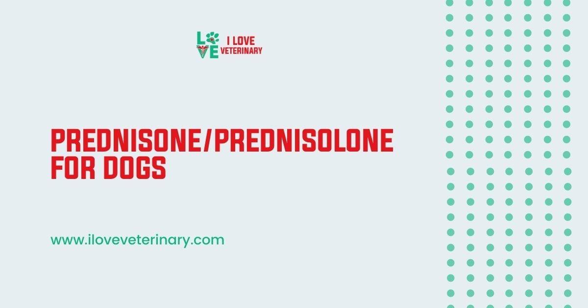 Prednisone/Prednisolone for Dogs - I Love Veterinary