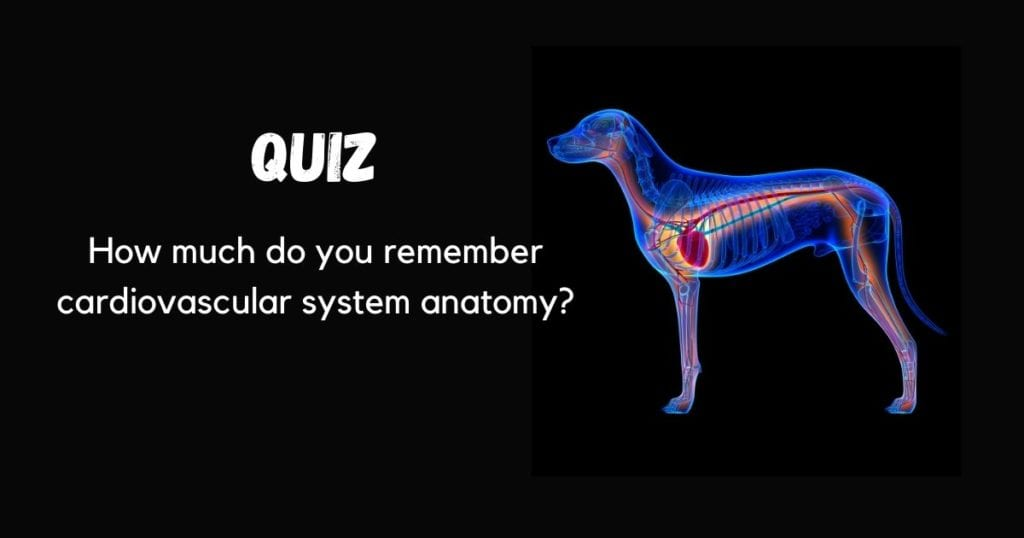 How much do you remember cardiovascular system anatomy? quiz by I Love Veterinary