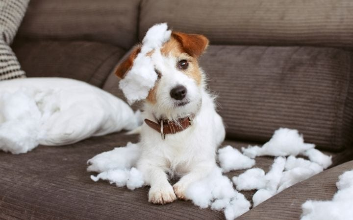 Separation anxiety, Melatonin for Dogs_ Uses, Benefits and Side Effects - I Love Veterinary
