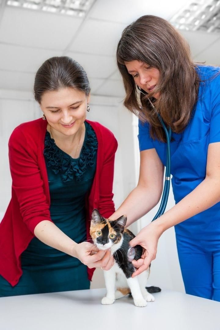Vet consults cat owner, Methimazole for Cats - I Love Veterinary