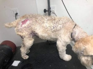 Dog with hot spots, Hot Spots on Dogs - I Love veterinary