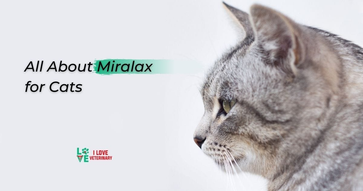 All About Miralax for Cats - I Love Veterinary