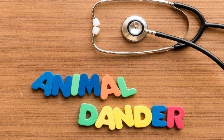 Animal dander, Cat Dandruff - I Love Veterinary
