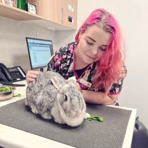 Basil Henry, Dannielle Green, Rouse Hill Family Vets Clinic, Vet Clinic Of the Week - I Love Veterinary