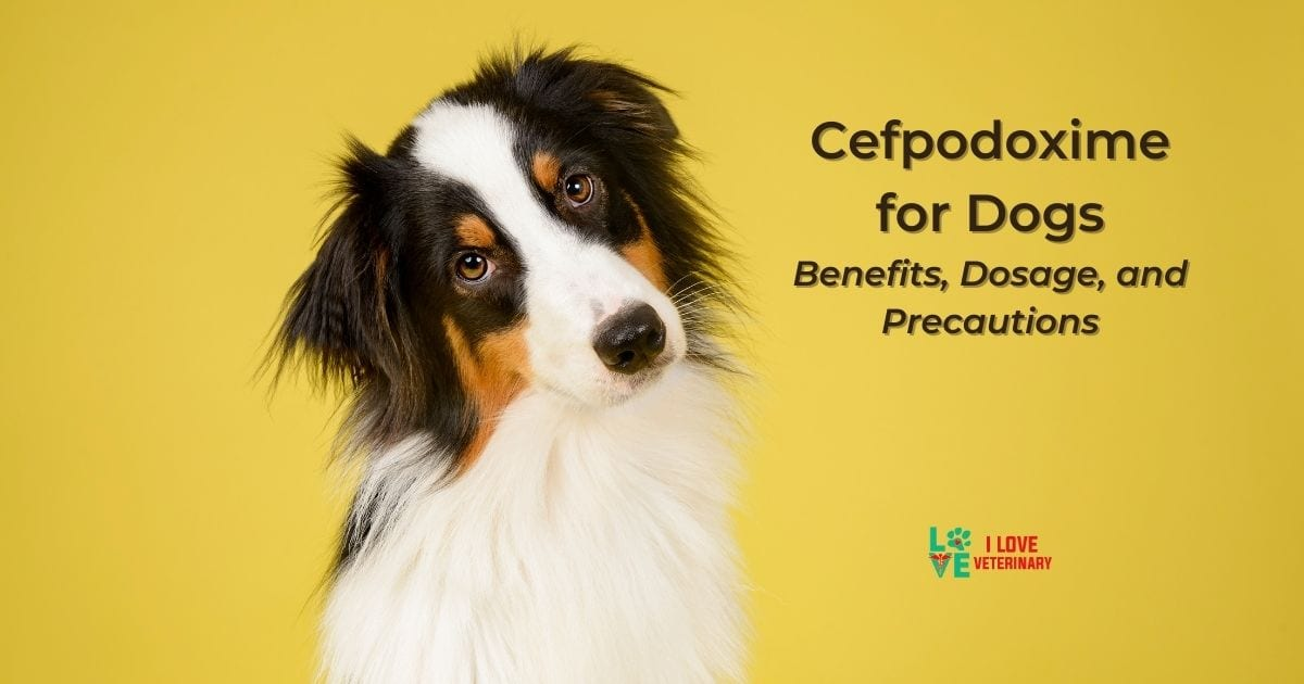 Cefpodoxime for Dogs - Benefits, Dosage, and Precautions
