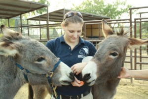 Donkeys, America's Teaching Zoo at Moorpark College, Vet Clinic Of the Week - I Love Veterinary