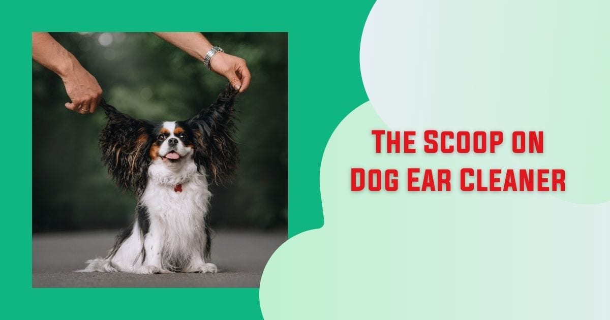 The Scoop on Dog Ear Cleaner - I Love Veterinary