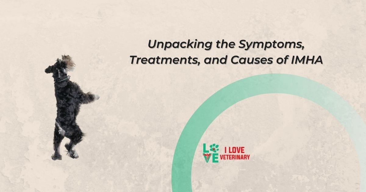 Unpacking the Symptoms, Treatments, and Causes of IMHA - I Love Veterinary