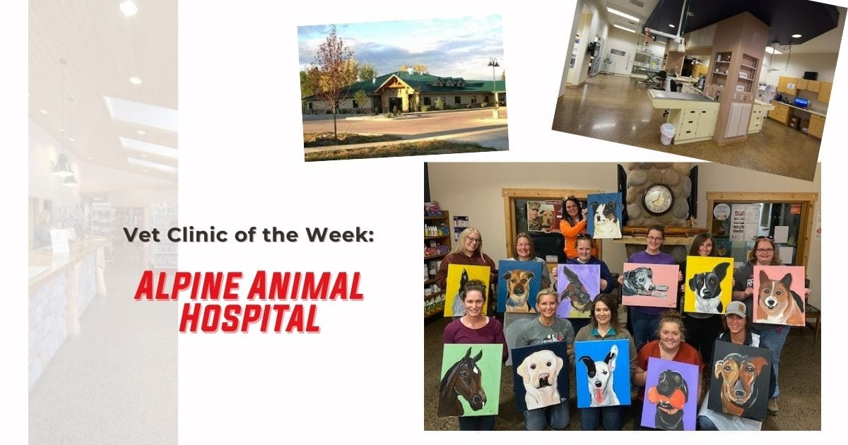 Vet Clinic of the Week: Alpine Animal Hospital - I Love Veterinary