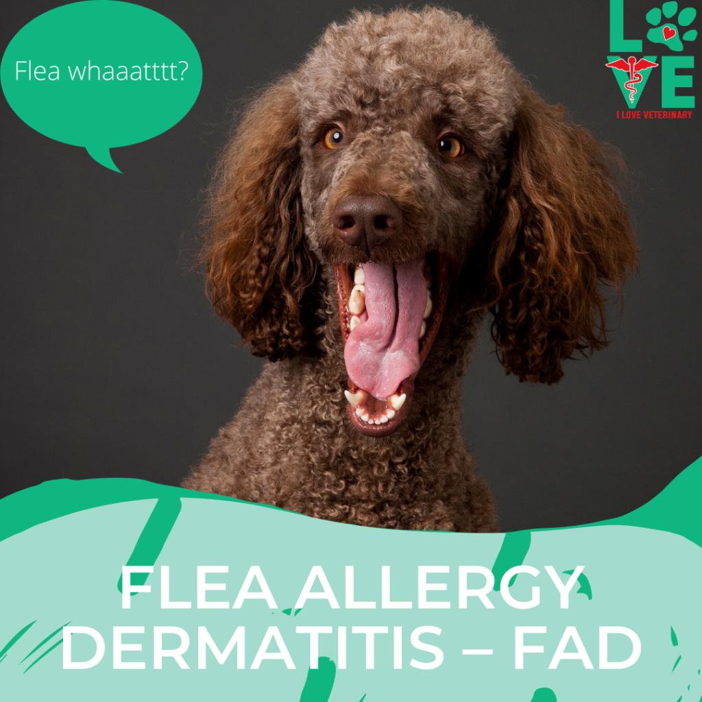 Flea Allergy Dermatitis in  – FAD
