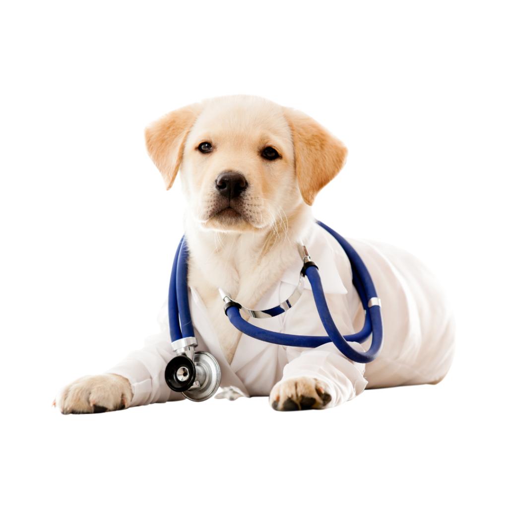 2 1 I Love Veterinary - Blog for Veterinarians, Vet Techs, Students
