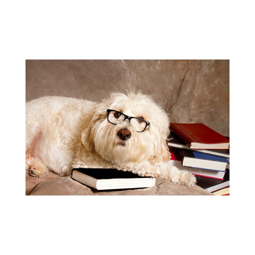 2 I Love Veterinary - Blog for Veterinarians, Vet Techs, Students