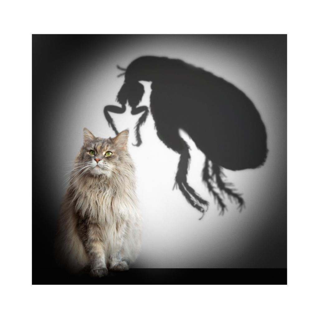 2 3 I Love Veterinary - Blog for Veterinarians, Vet Techs, Students