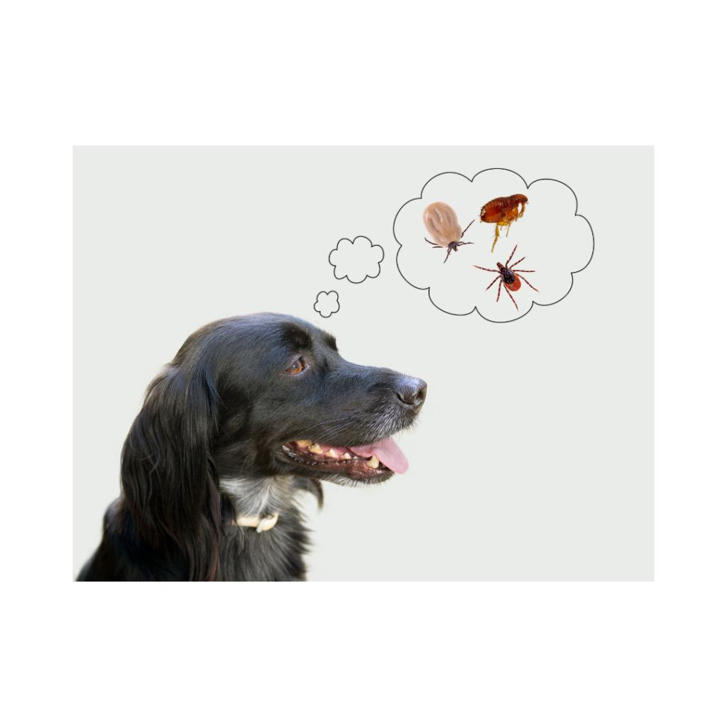 3 1 I Love Veterinary - Blog for Veterinarians, Vet Techs, Students