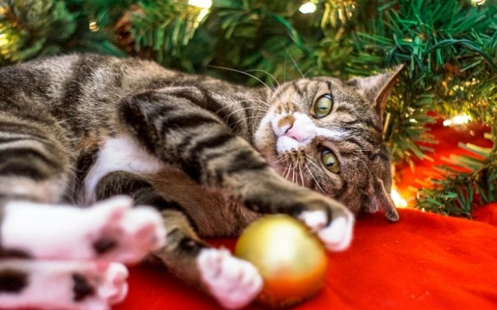 Cat playing with Christmas decoration, Top Pet Safety Tips for the Festive Season - I Love Veterinary
