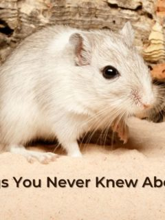 Cool Things You Never Knew About Gerbils - I Love Veterinary