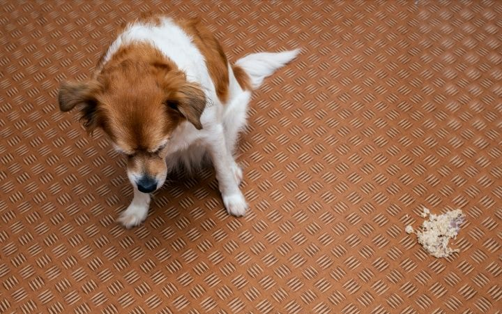 Dog vomiting, Antifreeze Poisoning in Dogs - I Love Veterinary