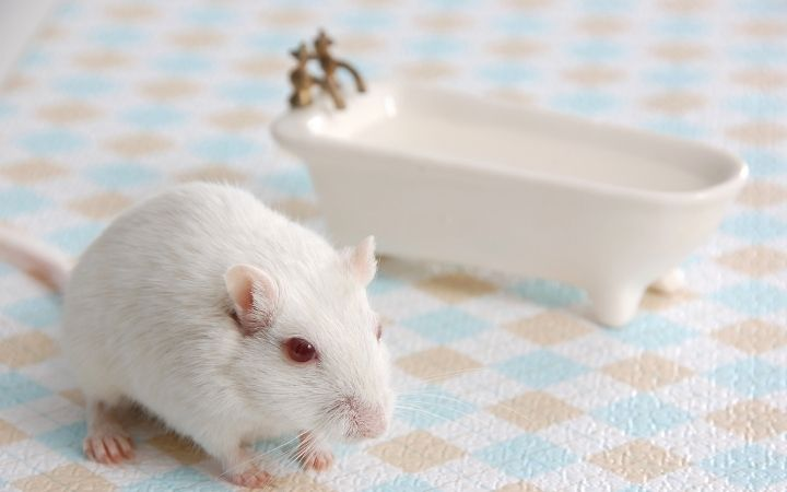 Gerbil with bathtub, Cool Things You Never Knew About Gerbils - I Love Veterinary