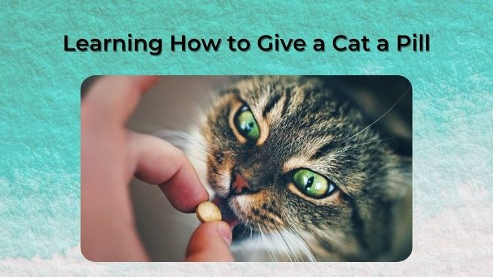 Learning How to Give a Cat a Pill - I Love Veterinary