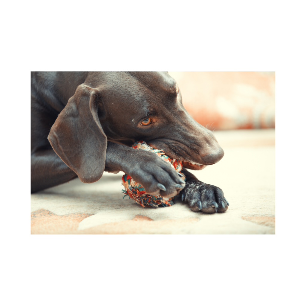 Thanksgiving guide for pets 3 I Love Veterinary - Blog for Veterinarians, Vet Techs, Students