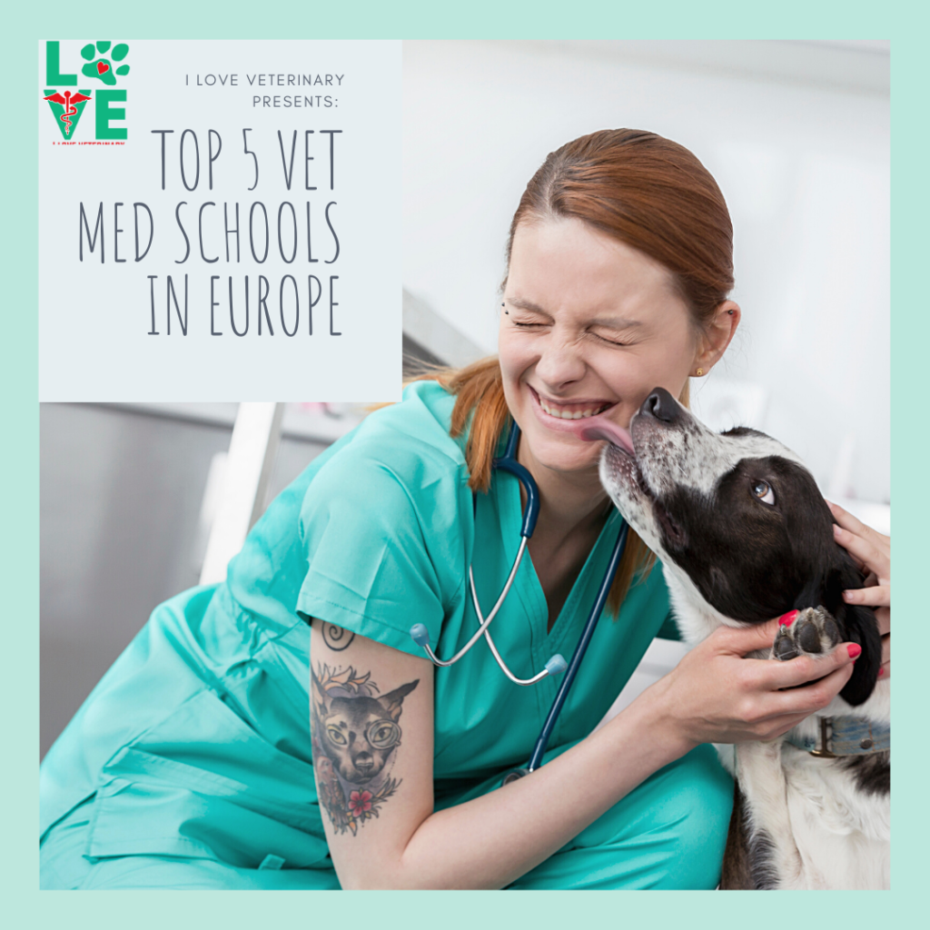 Top 5 Vet Med Schools in Europe 1 I Love Veterinary - Blog for Veterinarians, Vet Techs, Students